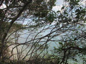 ザンジバル ビーチ!画像集。ヤシの木とボート添え